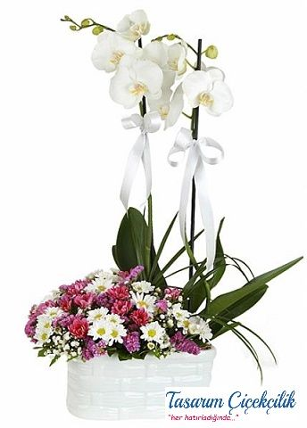 Papatya Aranjmanlı Orkide 523
