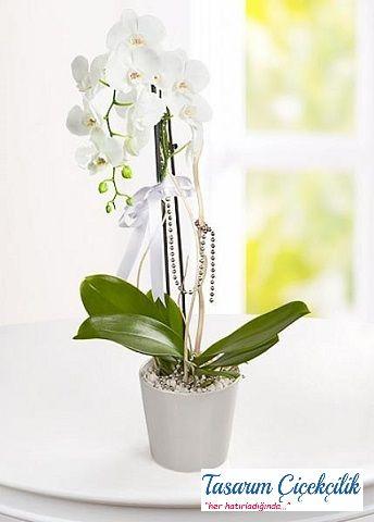 Tekli Beyaz Orkide 511