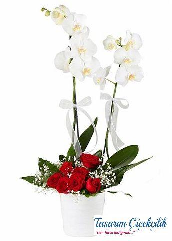 Gülü Orkide 525